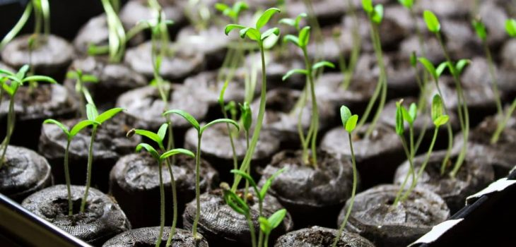 How To Use Rapid Rooter Plugs With Seeds