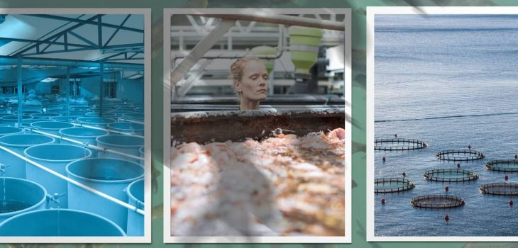Where To Buy Fish For Aquaponics