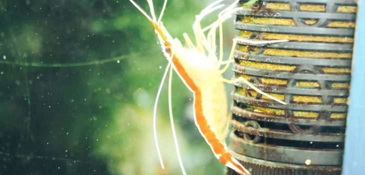 The Magic Of What Shrimps Eat In A Fish Tank